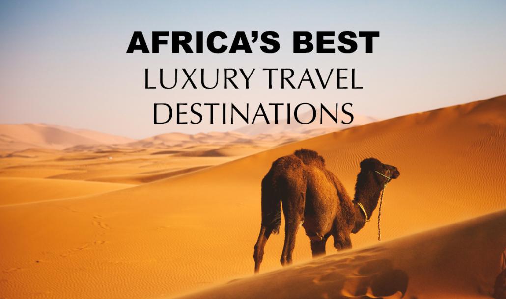 camel in sahara desert africa luxury travel