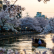 boat on water with cherry blossom in kyoto japan