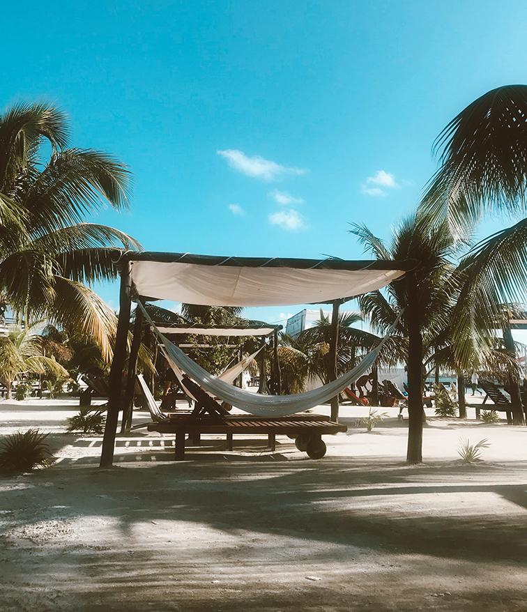 hammocks in belize by palm trees