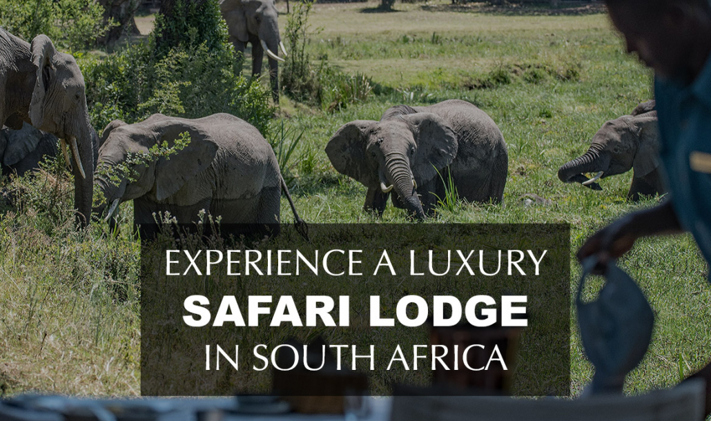 luxury safari lodge south africa with elephants